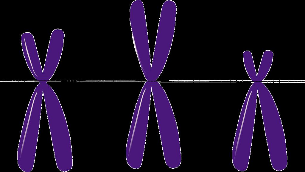 cromosomi X Y